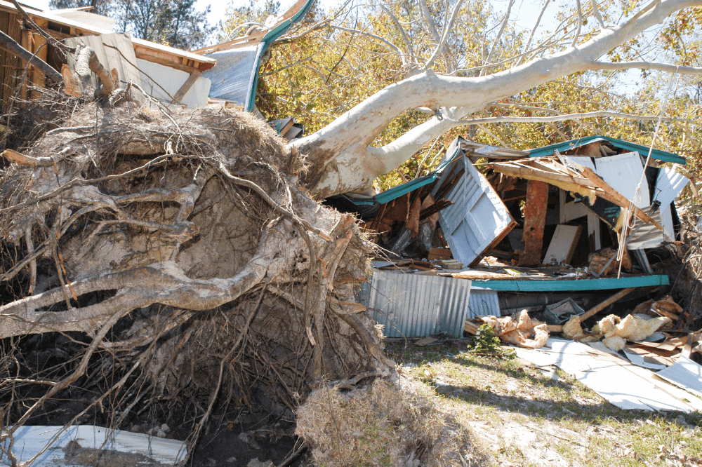 Hurricane damage, toppled tree, destroyed home in Louisiana